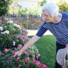 Long-term Clyde resident  Hazel Grant gardens at her home. Photos: Jono Edwards.