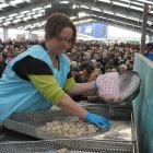 Alaina Oakley, of Invercargill, counts the shucked oysters during the oyster-opening heats at the Bluff Oyster and Food Festival on Saturday. Photos: Janette Gellatly