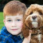 Companion Dogs for Kids!