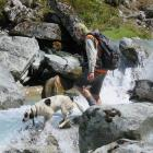 Paul van Klink and his dog Hoakie near Manapouri in January 2016 surveying the creek for whio or blue duck. Photo: Supplied