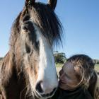 Cara Meyer, from Catlins Horse Riding, with Clydesdale-cross Angel. PHOTOS: DAVINIA NEALE...
