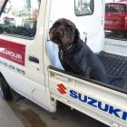 Gilmour Motors' mascot Gemma is guaranteed to give you a friendly greeting.
