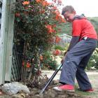 Roxburgh Area School pupil Eli Halker (10) helps clean the garden of a Tweed St house yesterday. Photos: Tom Kitchin