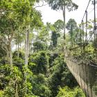 Kakum National Park's canopy walk was until recently the longest and highest in the world. Photos...