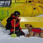 Vladka Kennett and Zara the Labrador train in the snow on Friday. Photos: Daisy Hudson