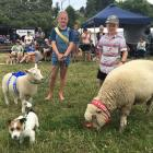 Georgia (11, left) and Will Vogan (9), of Duvauchelle, lead their pet lambs and dog during the...