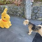 Enzo confronts a bunny while on a daily walk on Good Friday. PHOTO: BRIGIT VEITCH