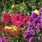 Two strong-coloured phlox are teamed with red Alstroemeria and yellow dahlias in a Dunedin...