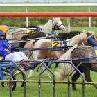 Children and ponies race in a Kidz Kartz event between races. PHOTOS: CHRISTINE O'CONNOR