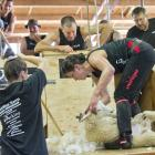 Gore shearer Megan Whitehead takes the fleece off another lamb on her way to a world record on...