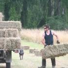 Hind Young Farmer's Mitchell Keir in action. PHOTOS: TONI WILLIAMS