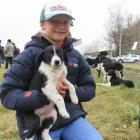 Blaise France (12), of Mt Somers, holds 8-week-old pup Olive ahead of the PGG Wrightson annual...