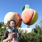 Invercargill painter Robbie Miller prepares to spray a shiny new coat on oversized fruit. Photos...