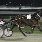 Expresso Martini can overcome an awkward draw at Forbury Park tonight. Photo by Matt Smith.