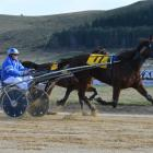 Tijuana Taxi lengthens out close to the line in the maiden trot at Oamaru yesterday. Photo by...