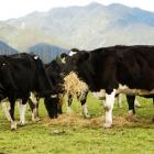 013-14 is shaping up to be a bumper dairy season. Photo by Dairy NZ.