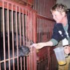 Dunedin veterinary nurse Anne Letham-White feeds a fruit drink to a moon bear named Pearl,...