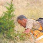 One fewer: Volunteer Warren Knox, of Dunedin, removes a wilding tree from a Naseby property...