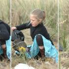Jenny Hjertquist (10) plants a native plant at Smaills beach on the Otago Peninsula as part of...