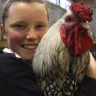 Josephine Parnham shows off her favourite rooster, Turkey, at the Oamaru Poultry, Pigeon and...