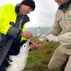 Down the hatch ... Doc rangers Lyndon Perriam and Colin Facer feed a chick at the colony...