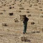 A 2degC rise in temperature will  result in India  losing 25% of its food production.  Here, a...