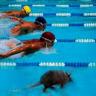 """Armadillos are discernibly more intelligent that most human swimmers.""  Photo montage by Roy..."