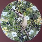 <i>Shining Cuckoo</i>, by Anna Priluka