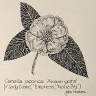 """Retrospective - Botanical drawings"", John Noakes (Bellamy's Gallery)"