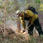 A forestry worker conducts a controlled burn to seal off a wildfire's path as it approaches a...