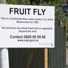 A fruit fly warning sign on the corner of Sandringham Road and Royal Terrace. Photo: NZ Herald