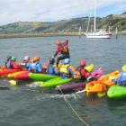 A group kayak-walking stunt on the Boat Harbour, Dunedin builds confidence. Photo supplied.