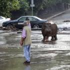 A man gestures at an escaped hippopotamus on a flooded street in Tbilisi.  REUTERS/Beso Gulashvili