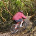 """A mountain biker sets out up the new """"Switchback Track"""" from Leith Valley Rd. Photo by Gregor..."""