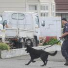 A police dog handler and his dog search for  a knife-wielding man who threatened staff at the Sai...