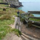 A visitor follows a worn and eroded track to view the sea cliffs at Taiaroa Head. Dunedin City...