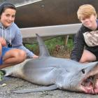 Abbotsford residents Hamish Milne (11, left) and Joel Stefani (11) inspect the mako shark left on...