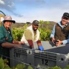 Alan Bradley, of Cromwell, Sam Bohe, of Ambrym Island in Vanuatu,  and Central Otago Winegrowers...