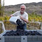 Alan Brady planted some of the Wakatipu region's first grape vines in the Gibbston Valley in 1981...