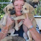 Alexandra SPCA inspector Helen Saunders with some of the puppies that might not have been left in...