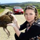 Alli Cunningham holds a weka near the spot where she hit it while driving in McIntosh Rd, in...