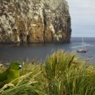 An Antipodes Island parakeet, endemic to the Sub Antarctic Islands, will benefit from a mouse...