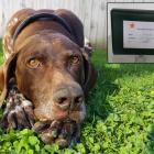 Andrea and David Pile's dog, Jazz, died in May and was cremated by Heaven Sent Pet Cremations in...