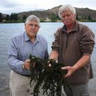 Andrew Burton and John Wilson hold handfuls of lagarosiphon scooped up from next to the boat...