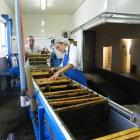 Andrew Crossen and Mel Weatherhead, of Ontario, Canada,  uncap  the wax from frames of honey at...