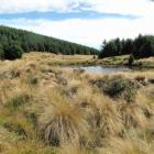 Avondale Forest, in Southland, slowly matures. Forestry is picked to be a gainer when gross...