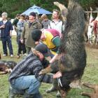 Balclutha man Caleb Leonard works on the winning boar, weighing in at 82kg. Behind Mr Leonard are...
