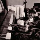 Bandit the semi-spaniel gives the semblance of knowing the difference between a semitone and a...