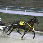 Better To Be Bad, who is looking to extend her fine record on Friday night at Forbury Park. Photo...