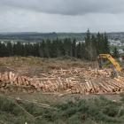 A new programme should result in less waste from forestry. Photo by Glenn Conway.